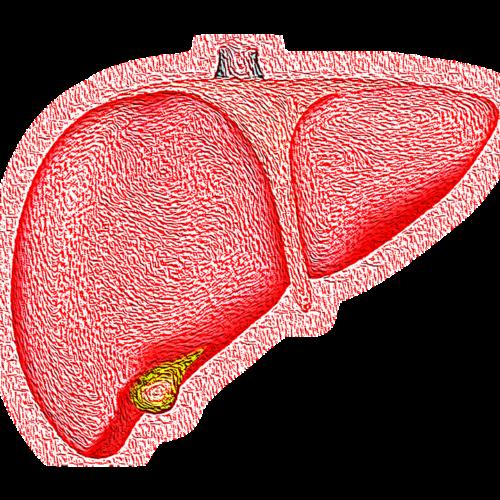 Signos de tu Hígado Graso sobrecargado de Toxinas.